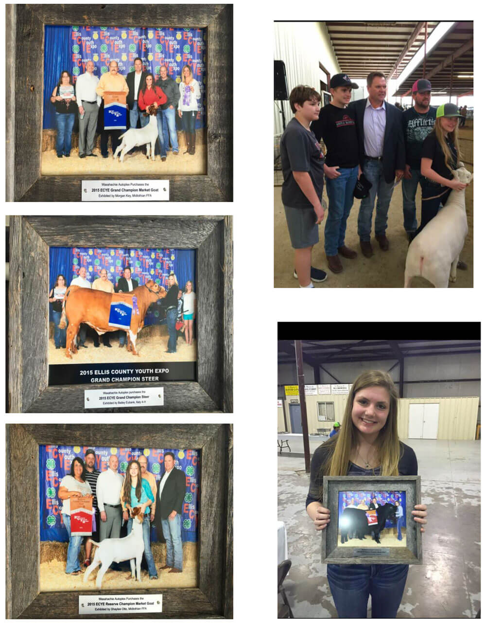 Support Ellis County Youth Expo