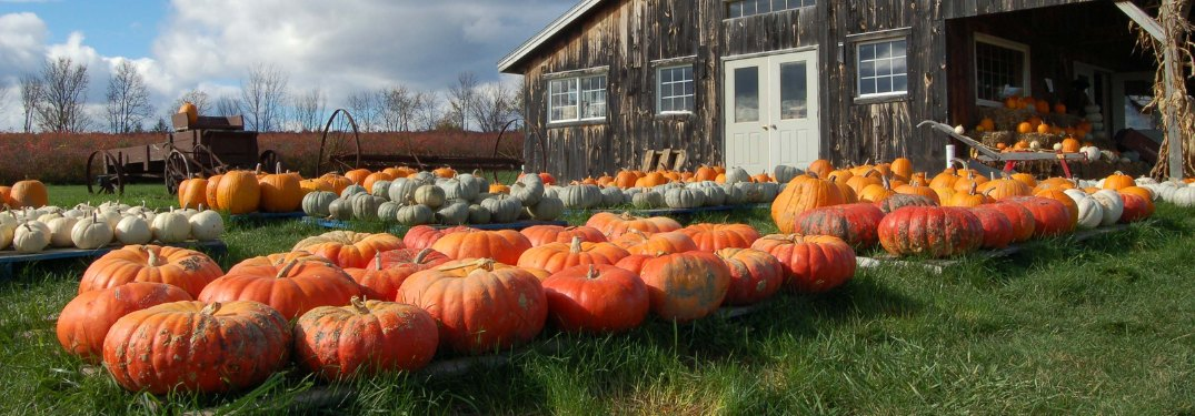 Pumpkins sitting outdoors by a barn
