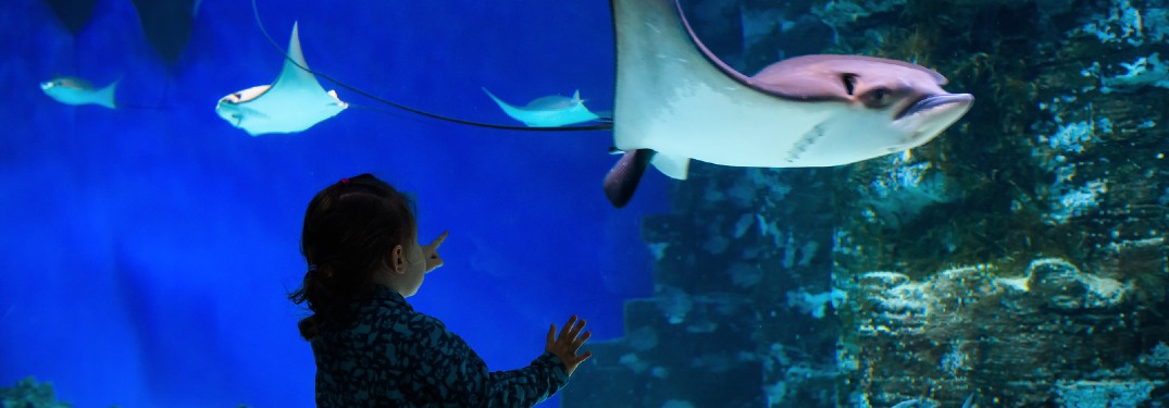 Fun Things to Do with Kids in Tampa, Florida