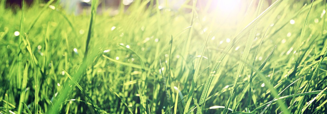Close up of grass with sunlight in the background