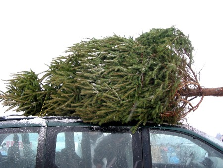 Close up of a tree tied to the roof of an SUV