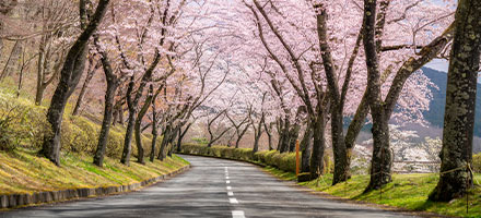 SPRING TRAVEL PACKAGE SPECIAL